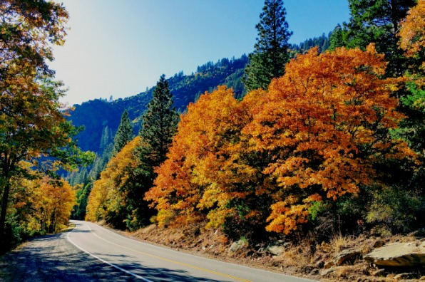 Plumas County Fall Color