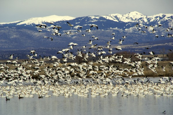 Modoc Wildlife Refuge