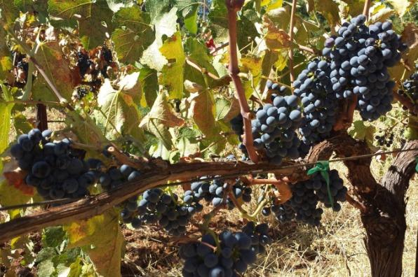Mount Tehama Winery