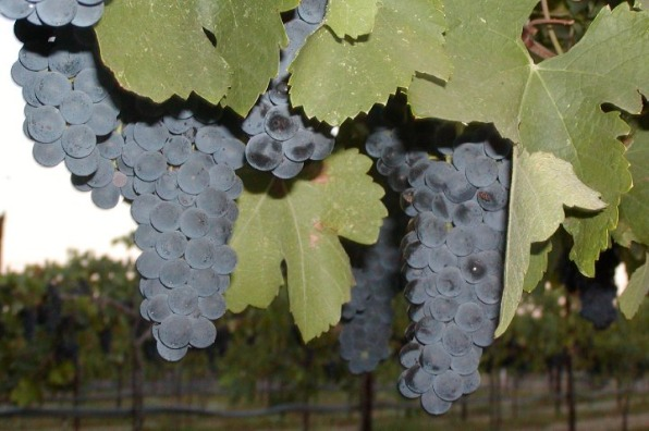 Wild Oak Vineyard & Winery