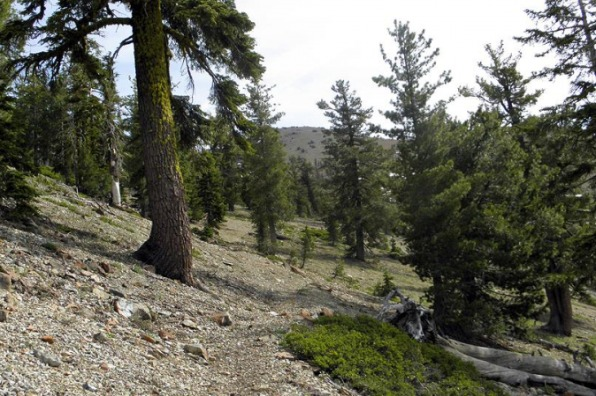 Sisson-Callahan National Recreation Trail
